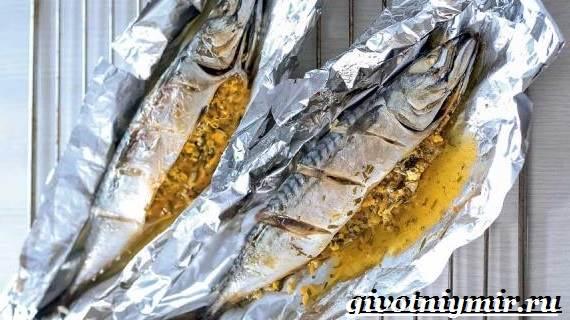 Скумбрия-рыба-Образ-жизни-и-среда-обитания-скумбрии-7
