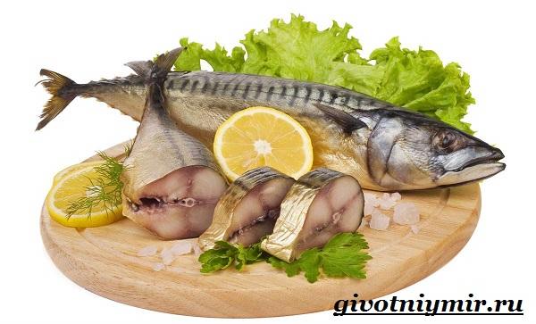 Скумбрия-рыба-Образ-жизни-и-среда-обитания-скумбрии-8