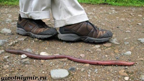 Дождевой-червь-Образ-жизни-и-среда-обитания-дождевого-червя-3