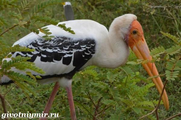 Клювач-птица-Образ-жизни-и-среда-обитания-клювача-1