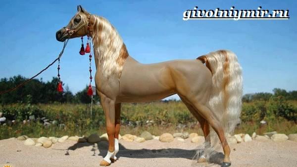 Арабская лошадь характеристика породы