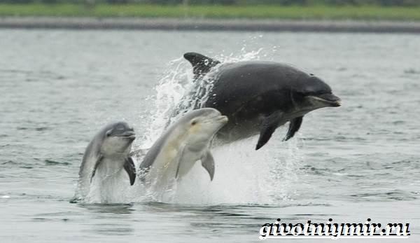 Дельфин-афалина-Образ-жизни-и-среда-обитания-дельфина-афалина-10