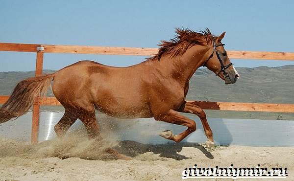 Донская-лошадь-Описание-особенности-виды-уход-и-цена-донской-лошади-7