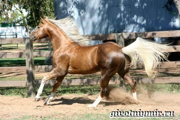 Гнедая-лошадь-Описание-виды-уход-и-цена-гнедой-лошади-6