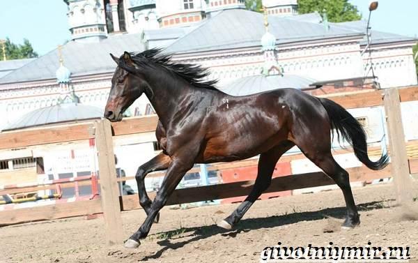 Гнедая-лошадь-Описание-виды-уход-и-цена-гнедой-лошади-8