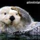 Калан морская выдра. Образ жизни и среда обитания калана