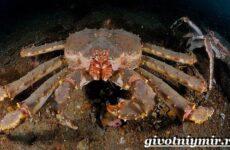 Камчатский краб. Образ жизни и среда обитания камчатского краба