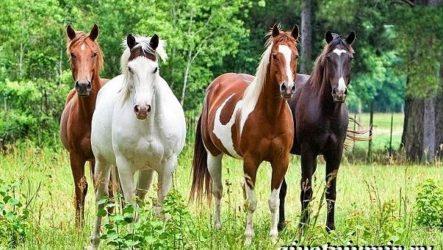 Масти лошадей. Описание, фото и названия мастей лошадей
