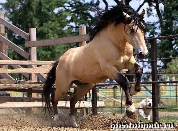 Масти-лошадей-Описание-фото-и-названия-мастей-лошадей-10