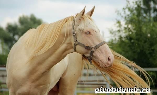 Масти-лошадей-Описание-фото-и-названия-мастей-лошадей-13