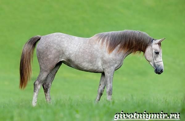Масти-лошадей-Описание-фото-и-названия-мастей-лошадей-14