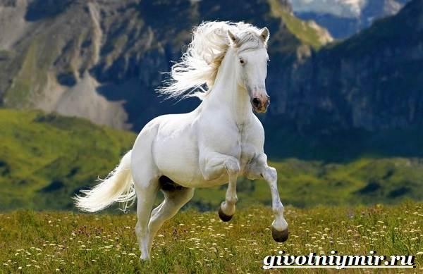 Масти-лошадей-Описание-фото-и-названия-мастей-лошадей-15