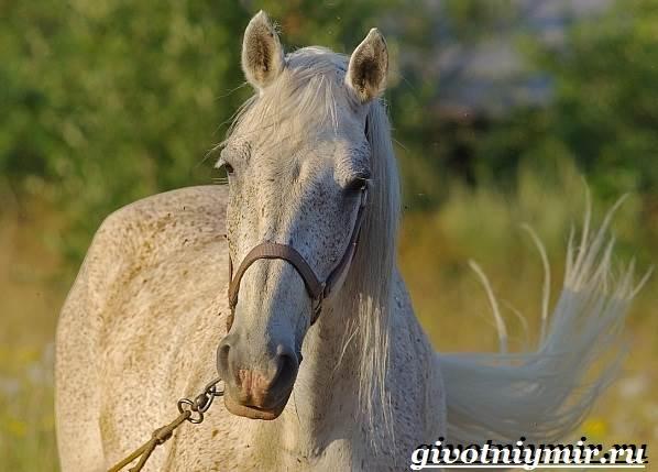 Масти-лошадей-Описание-фото-и-названия-мастей-лошадей-16