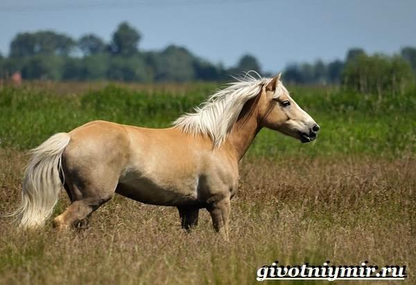 Масти-лошадей-Описание-фото-и-названия-мастей-лошадей-18