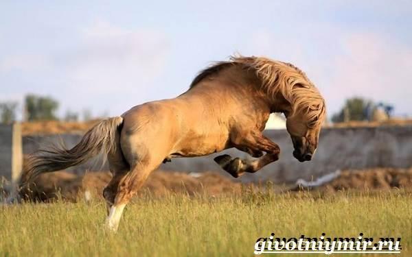 Масти-лошадей-Описание-фото-и-названия-мастей-лошадей-19