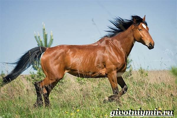 Масти-лошадей-Описание-фото-и-названия-мастей-лошадей-2