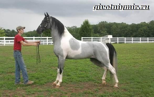 Масти-лошадей-Описание-фото-и-названия-мастей-лошадей-21
