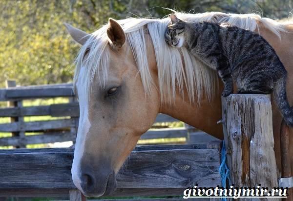 Соловая-лошадь-Описание-виды-уход-и-цена-соловой-лошади-1