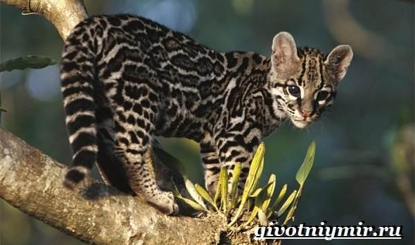 Кошки с тигровым окрасом