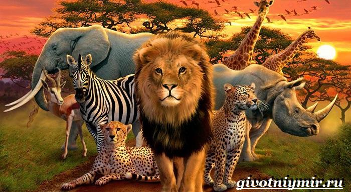 Животные-Африки-Образ-жизни-и-среда-обитания-животных-Африки-1