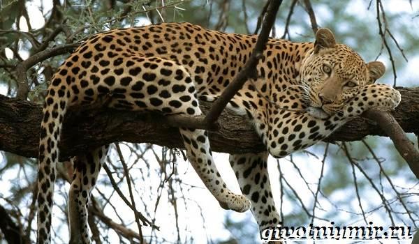 Животные-Африки-Образ-жизни-и-среда-обитания-животных-Африки-10