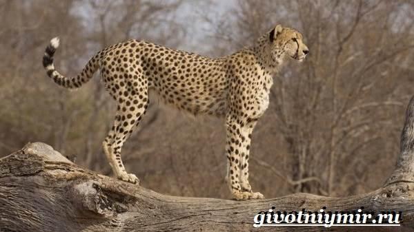 Животные-Африки-Образ-жизни-и-среда-обитания-животных-Африки-11