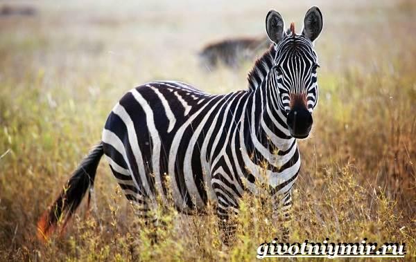 Животные-Африки-Образ-жизни-и-среда-обитания-животных-Африки-13