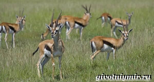 Животные-Африки-Образ-жизни-и-среда-обитания-животных-Африки-16
