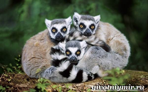 Животные-Африки-Образ-жизни-и-среда-обитания-животных-Африки-17