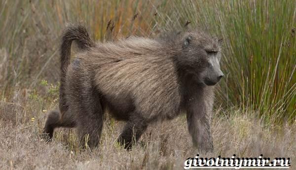 Животные-Африки-Образ-жизни-и-среда-обитания-животных-Африки-18