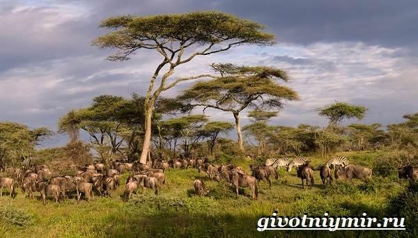 Животные-Африки-Образ-жизни-и-среда-обитания-животных-Африки-2