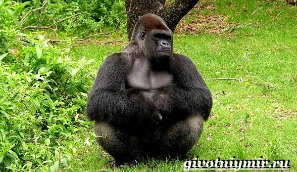 Животные-Африки-Образ-жизни-и-среда-обитания-животных-Африки-20