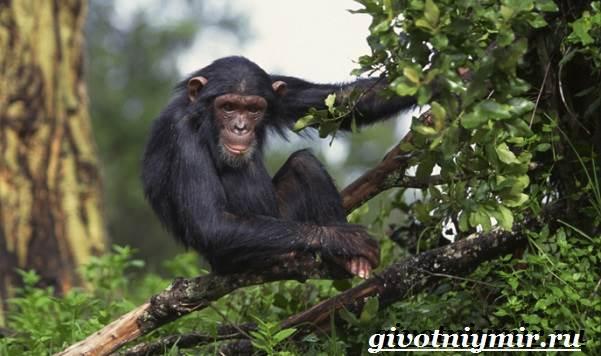 Животные-Африки-Образ-жизни-и-среда-обитания-животных-Африки-22