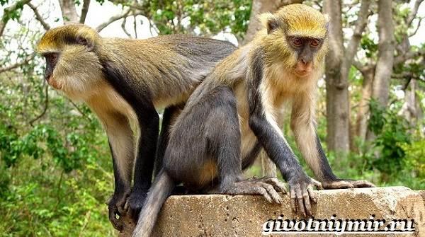 Животные-Африки-Образ-жизни-и-среда-обитания-животных-Африки-23