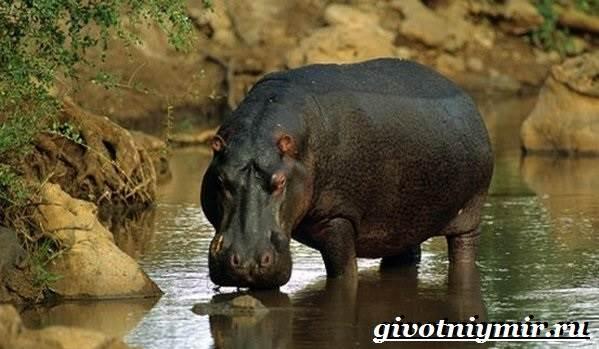 Животные-Африки-Образ-жизни-и-среда-обитания-животных-Африки-28