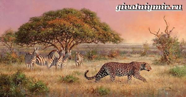 Животные-Африки-Образ-жизни-и-среда-обитания-животных-Африки-3