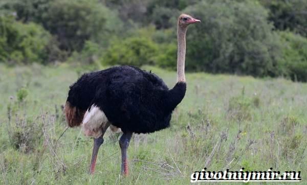 Животные-Африки-Образ-жизни-и-среда-обитания-животных-Африки-31
