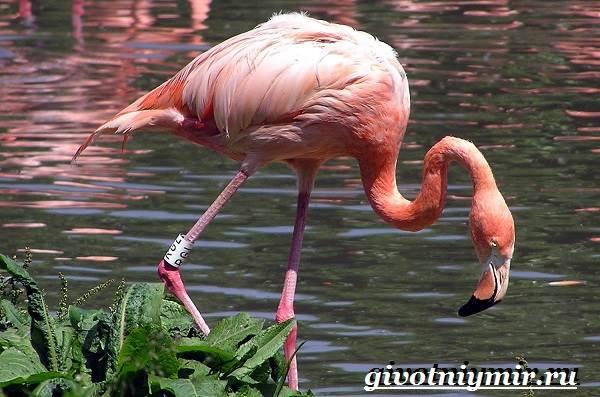 Животные-Африки-Образ-жизни-и-среда-обитания-животных-Африки-32