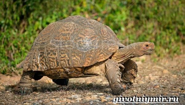 Животные-Африки-Образ-жизни-и-среда-обитания-животных-Африки-35