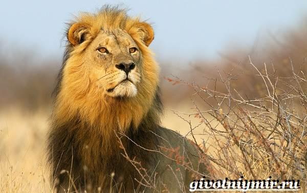 Животные-Африки-Образ-жизни-и-среда-обитания-животных-Африки-4