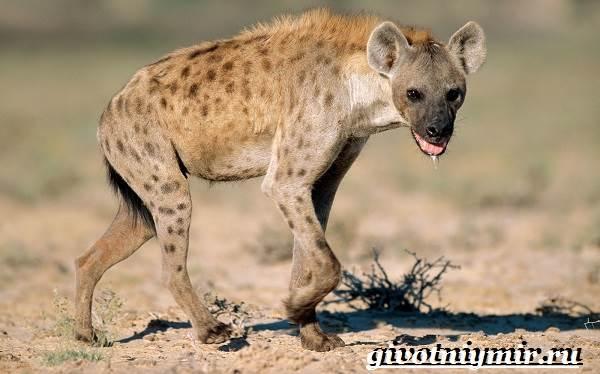 Животные-Африки-Образ-жизни-и-среда-обитания-животных-Африки-5