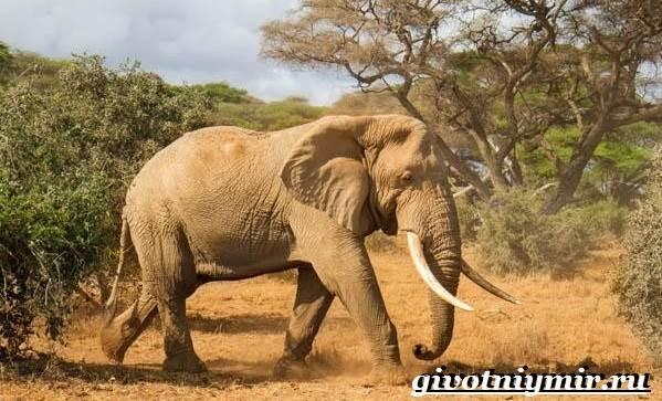 Животные-Африки-Образ-жизни-и-среда-обитания-животных-Африки-7