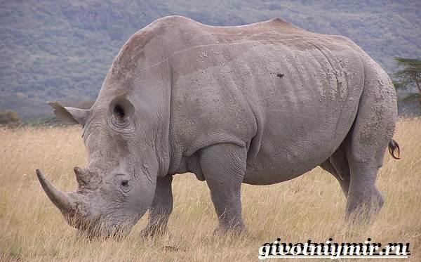 Животные-Африки-Образ-жизни-и-среда-обитания-животных-Африки-8