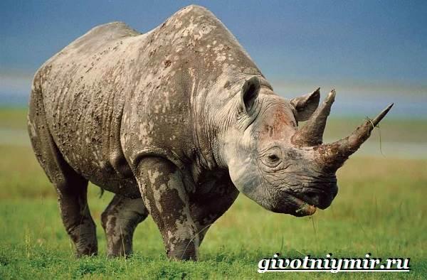 Животные-Африки-Образ-жизни-и-среда-обитания-животных-Африки-9