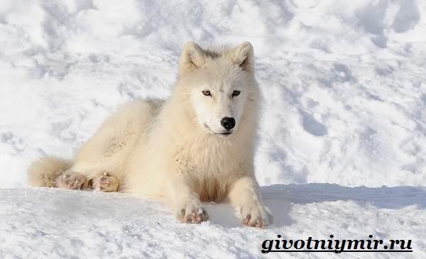 Животные-Арктики-10