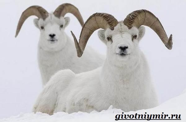 Животные-Арктики-13