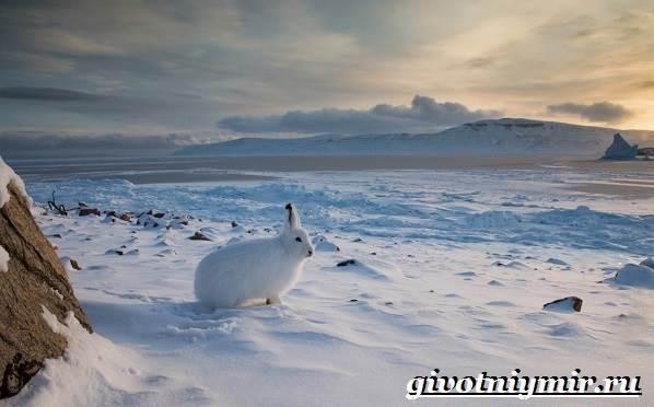 Животные-Арктики-14
