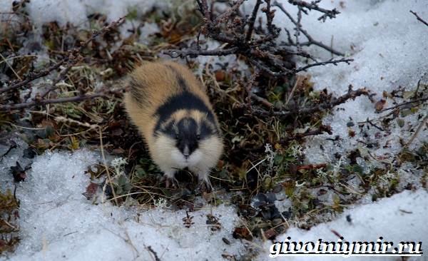 Животные-Арктики-17