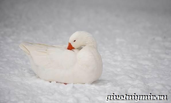 Животные-Арктики-29