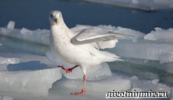 Животные-Арктики-30
